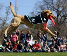 Zeke The Wonder Dog | 25 Reasons You Wish You Were A Michigan State Spartan