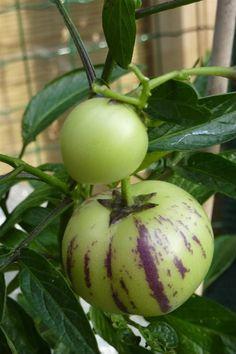Bijzondere soorten groenten en fruit, oa cucamelon
