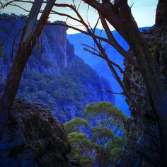 "The Blue Mountains, on the Great Escarpment well east of Magic Mountain,  into the Colo Wilderness, New South Wales, Australia.  ""When the Eucalyptus oil is steaming the  forests and the temperature of the day is cold  the Blue  Mountains become the Ultra-Blue Mountains"" The  Oils Up by Warren Hudson"