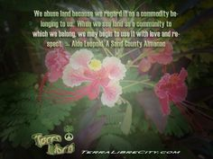 Believe in a better tomorrow #sustainable #future #TerraLibreCity #QOTD  - http://terralibrecity.com/?attachment_id=1858