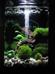 79 best aquascape ideas images in 2019 aquascaping fish tanks rh pinterest com