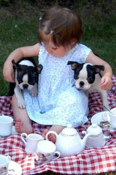 toddler with two boston terriers! / I ♥ Boston Terriers. Boston Terriers, Boston Terrier Love, Terrier Puppies, Animals For Kids, Baby Animals, Cute Animals, Jiff Pom, Baby Kind, Belle Photo