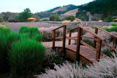 Known for the lavender that graces the grounds of their winery, Matanzas Creek Winery in Santa Rosa also conspires to awaken your senses with yoga and wine offerings.
