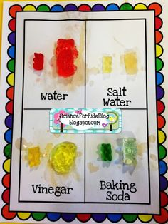 Gummy Bear Science 50 mL of liquid, 1 tbls salt or baking soda. Left overnight