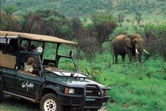 Kwa Maritane Bush Lodge offers luxury accommodation in Pilanesberg Wildlife Safari, Road Trip With Kids, Travel Deals, Travel Hacks, Explore Travel, Game Reserve, Like A Local, Travel Alone, Dream Vacations