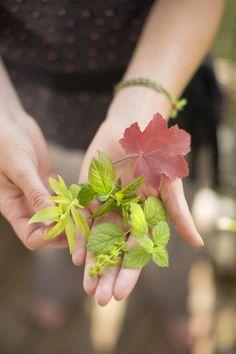 Menthe, mélisse, verveine citron, sauge ananas côtoient les framboisiers qui donnent leurs derniers fruits d'automne. Botanic®