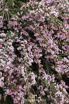 Organic Kitchen Gardening By Maitri Mehta Key: 5508094575 Australian Native Garden, Australian Native Flowers, Australian Plants, Sun Plants, Garden Plants, Shade Plants, Cold Climate Gardening, Organic Gardening, Planting Succulents