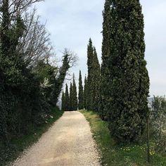 Bellissima giornata nelle colline della Val d'Illasi. Pace, natura e relax! ❤️ #igersverona #illasi #valdillasi #verona #nature #italy #instanature #intothenature #peacetime