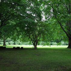 #green #botanicalgarden of #hokkaidouniversity in #sapporo #hokkaido #hokkaidolikers #北海道 #instatravel #travel