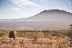 View of elephant in front of Kilimanjaro from Satao Elerai Camp, Kenya