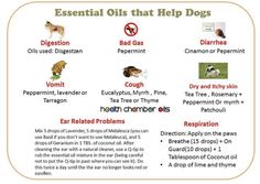Essential Oils Dogs, Dog Toilet, Tea Tree, Peppermint, No Worries, Pets, Mint, Animals And Pets