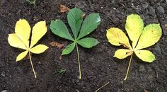 Leaf Multiplication @ creative star learning