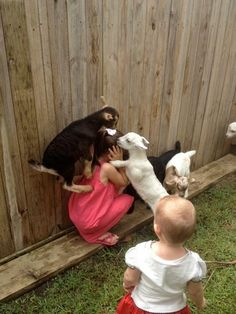 These goats who aggressively want this little girl to understand how good they have it. | 23 Goats Who Cannot Believe They're Really Goats
