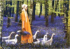 Irish Goose Girl, walking through a blue bell forest...
