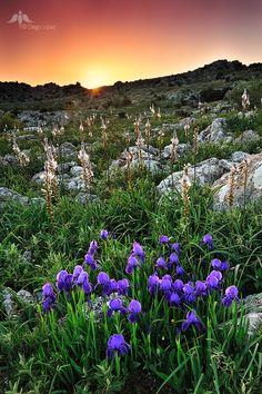 Andalucia en primavera by Diego Lopez, via 500px