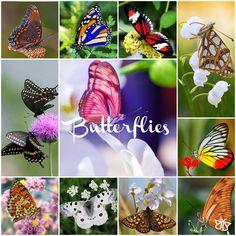 Les Papillons | Notre Belle Nature