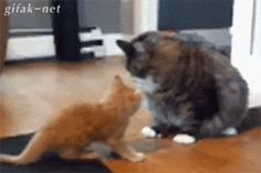 """""""Get the hell away from me."""" H/T <a href=""""http://go.redirectingat.com?id=74679X1524629"""