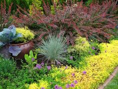 sedum angelina front yard edging - All For Garden Landscape Design, Garden Design, Plant Design, Yard Edging, Chartreuse Color, Ground Cover Plants, Traditional Landscape, Unique Gardens, Front Yard Landscaping