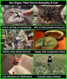 I adore cats ,I get it now actually i am one of them lol - 9GAG