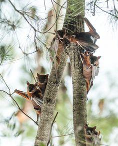 Friends in a Pine Tree