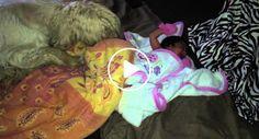 Cão Com Grande Instinto Maternal Aconchega Recém-Nascida Tapando-a Com Cobertor