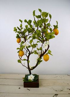 Lemon Tree Manzanita Centerpiece
