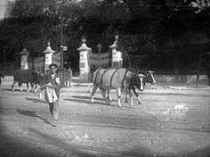 Lisboa de Antigamente: Calçada Santa Helena, Portugal, Historical Photos, Lisbon, Horses, Rios, Places, Animals, Memories