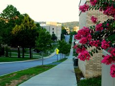College Town Guide To Fayetteville Arkansas