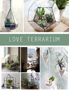Add a touch of greenery to your living space with a beautiful and delicate terrarium. Whether on display on a table top or hanging from a shelf or ceiling, a mini open-air garden in a glass container is a fun and creative.