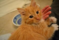 Mojo was adopted!