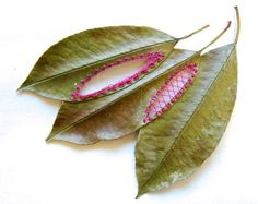 Artist Hillary Fayle creates artworks where she mixes nature and the art of embroidery by assembling plants leaves, by adding colorful threads and cutting the leaves