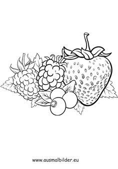 Himbeere Ausmalbilder Beeren fruits and vegetables