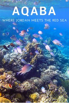 Welcome to Aqaba, a laid-back city in Jordan with a small town vibe on the edge of the Red Sea. #MiddleEast #travel