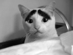 Cat with eye blows