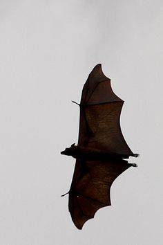And by the way, encountered some giant bats!