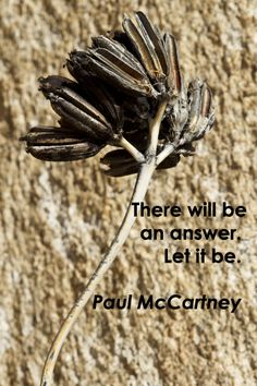 """""""There will be an answer. Let it be."""" – Paul McCartney – On image of desert yucca's stem and seed pods by Florence McGinn -- Explore quotes on the grace and power of life's journey at http://www.examiner.com/article/travel-a-road-of-literate-quotes-about-the-journey"""