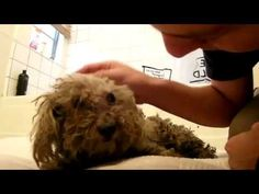 Very inspiring dog video about blind dog living in trash then rescued and given a new life. Pass it on! dogvideos