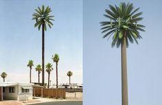 torre de telefonía celular disfrazada de palmera