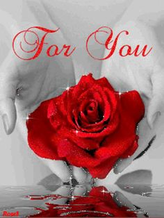 To my dear Joe♡♡♡,sending you this red rose with all my Love♡. Roses Gif, Flowers Gif, Beautiful Rose Flowers, Beautiful Love Images, I Love You Pictures, Good Night I Love You, Love You Gif, Good Morning Gif, Good Morning Flowers