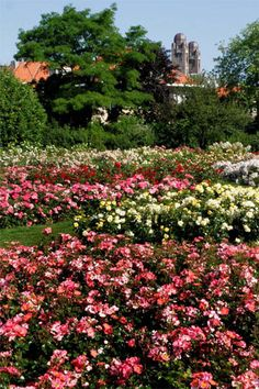 The Day of the Rose in Westbroekpark in The Hague will be held on Sunday, 8 July from 10.00 to 16.30 hrs. The event is similar to a country fair.