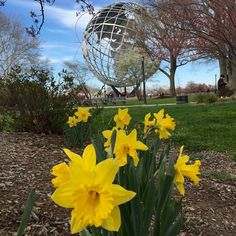#SignsOfSpringNYC Instagram contest #springtime in #NewYorkCity. Multiple submissions allowed 04/18/15 to 05/03/15 http://www1.nyc.gov/nyc-resources/signs-of-spring-nyc.page (must submit via this link)  To be eligible to win:  You must be a resident of New York City Your photo must be taken in New York City Your photo must be in square format