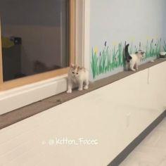 Dodge responsibility like this kitten🐱🐱Follow @9gag App📲👉@9gagmobile 👈 - - - 📹@kitten_faces #9gag #kitten #fosterkitten #cute #stealth