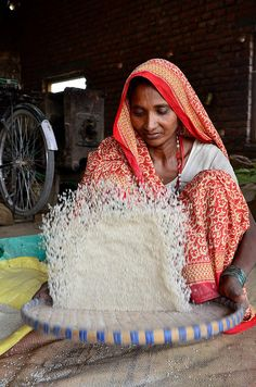woman winnowing rice, Nepal