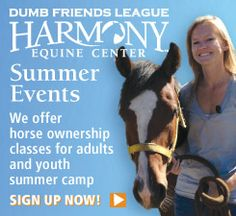 The Dumb Friends League offers summer classes for adults and youth who are interested in horse adoption, care and training, as well as a two-day camp for youth that introduces them to all things horse-related. Classes take place at the Harmony Equine Center in Franktown.