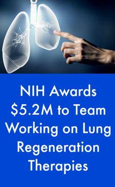 NIH Awards $5.2M to Team Working on Lung Regeneration Therapies #PulmonaryFibrosisNews