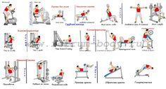 Виды тренажеров и упражнения