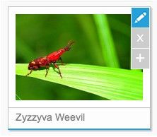Yellowfin Image Management