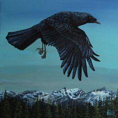 Kim Schult's gallery - birds