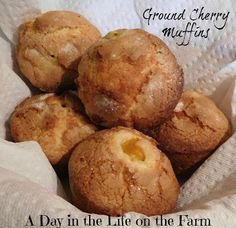 farm recipes - Ground Cherry Muffins for MuffinMonday Cherry Bread, Cherry Muffins, Peach Muffins, Coconut Muffins, Baking Muffins, Muffin Recipes, Baking Recipes, Yummy Recipes, Healthy Recipes
