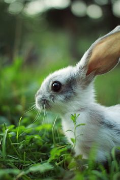 Cute little bunny rabbit. Animals And Pets, Baby Animals, Funny Animals, Cute Animals, Animals Planet, Cute Creatures, Beautiful Creatures, Animals Beautiful, Baby Bunnies